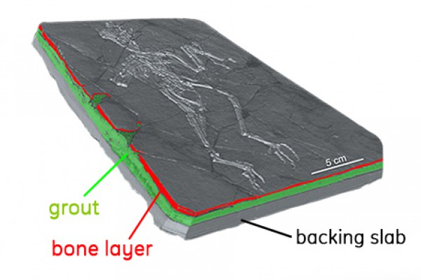 Micro-CT in Paleontology